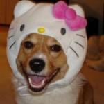 《番外編1》海外 ハロウィーン 動物おもしろコスチューム 犬編